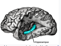 Hippocampus health can prevent alzheimer's