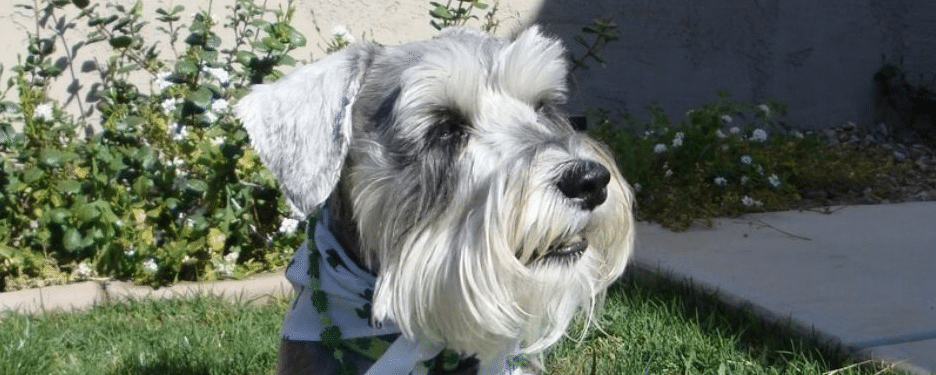 Mutts on a Mission needs Canine volunteers as well as human volunteers